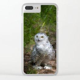Alaskan Snowy Owl - Summer Clear iPhone Case