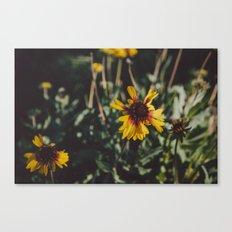 Autumn Daisies Canvas Print