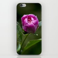 peony iPhone & iPod Skins featuring Peony by Christina Rollo