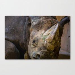 Sleeping Rhinoceros Canvas Print
