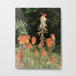 Orange Starburts - Twilight Paintings Dana Tinnell Metal Print