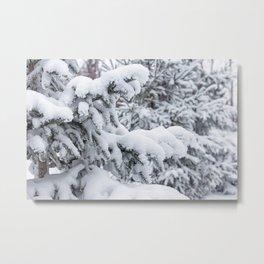 Freshly Fallen Snow on Spruce Trees 2 Metal Print