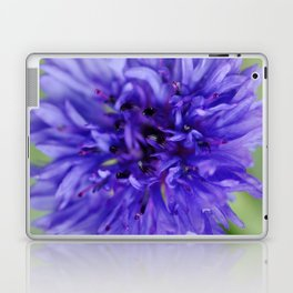 Cornflower Blue Bachelors Button Flower Laptop & iPad Skin