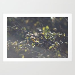Nettles Art Print