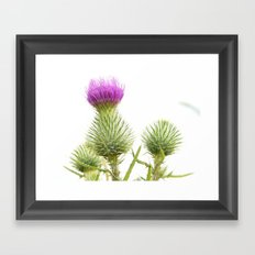 Nature Photography Framed Art Print