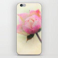 Soft and Gentle Rosebud iPhone & iPod Skin