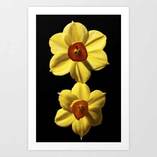 Mini Daffodils  Art Print