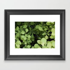 Leafy composition Framed Art Print
