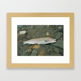 Rainbow trout at rest Framed Art Print