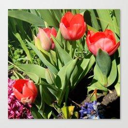 Tulips & Hyacinths  Canvas Print