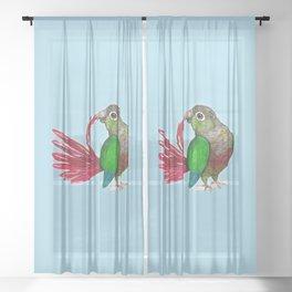 Preening green cheek conure Sheer Curtain
