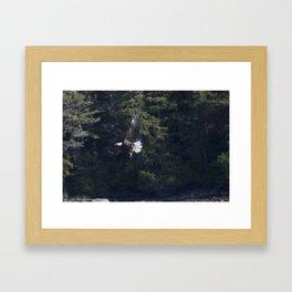 Eagle Fishing Framed Art Print