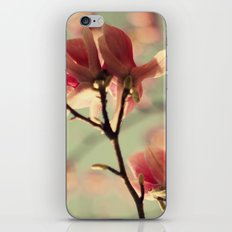 Dogwood flowers iPhone & iPod Skin
