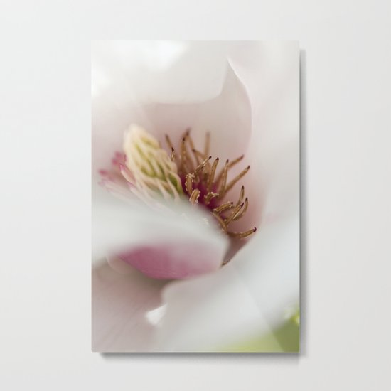Macro Of A Tulip Tree Blossom Metal Print