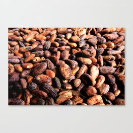 Cocoa seeds Canvas Print