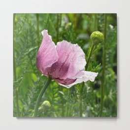 Sweet Pink Poppy with raindrops Metal Print