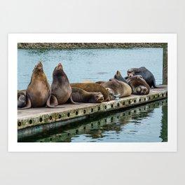 Sea Lions on the dock Art Print