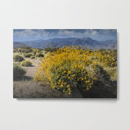 Wild Desert Flowers Blooming in the Anza-Borrego Desert State Park, Southern California Metal Print