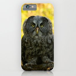 Owl Staring Contest iPhone Case