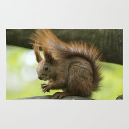Red squirrel eating nuts Rug