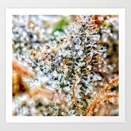 Top Shelf Diamond OG Strain Buds Calyxes Amber Trichomes Close Up View Art Print