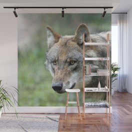 Wolf_20171201_by_JAMFoto Wall Mural