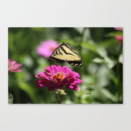 Colorful Swallowtail Butterfly Flying Canvas Print