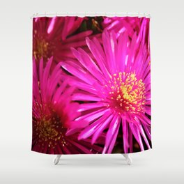 Ice Plant Pink Cactus Flowers Shower Curtain