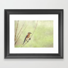Perched On A Frail Branch Framed Art Print