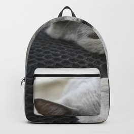 Shades Of Grey Cat Photo Portrait Backpack
