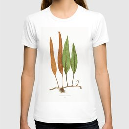 Edward Joseph Lowe - Niphobolus Ingua T-shirt
