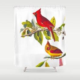 Cardinal Vintage Bird Illustration Shower Curtain