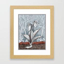 Lady Slipper Botanical Framed Art Print