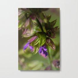 Sage flower Metal Print