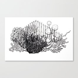 sea plants Canvas Print