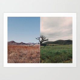Same Tree, Different Season Art Print