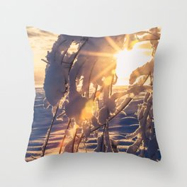 Midday sunburst through snow covered branches at Creamers Field Throw Pillow