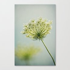 The Lady's Lace Canvas Print
