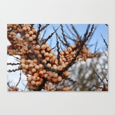 Crammond Canvas Print