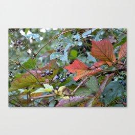 Autumn Purple Berries Canvas Print