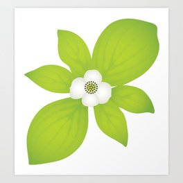 Bunchberry Dogwood - PNW Forest Wildflower Art Print