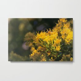 Macro photo golden flowers Metal Print