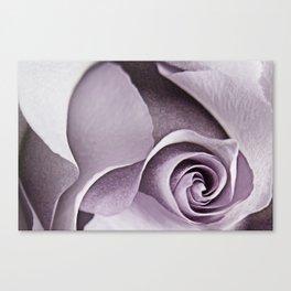 lavender rose Canvas Print