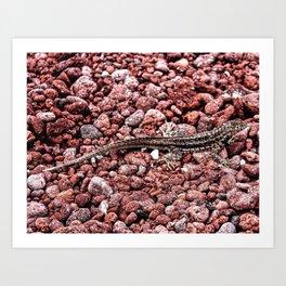 Lava Lizard Art Print