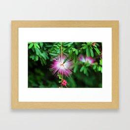 Flower photography by Uthpala Shyamendra Framed Art Print