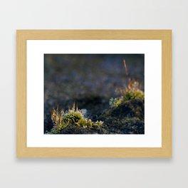 Frosty Moss 2 Framed Art Print