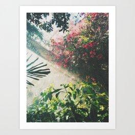 Botanical tropical Art Print