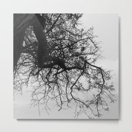 Bare Tree Branches Winter Metal Print