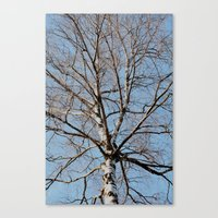 birch Canvas Prints featuring Birch by Monica Georg-Buller