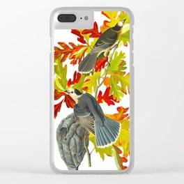 Vintage Canada Jay Illustration Clear iPhone Case
